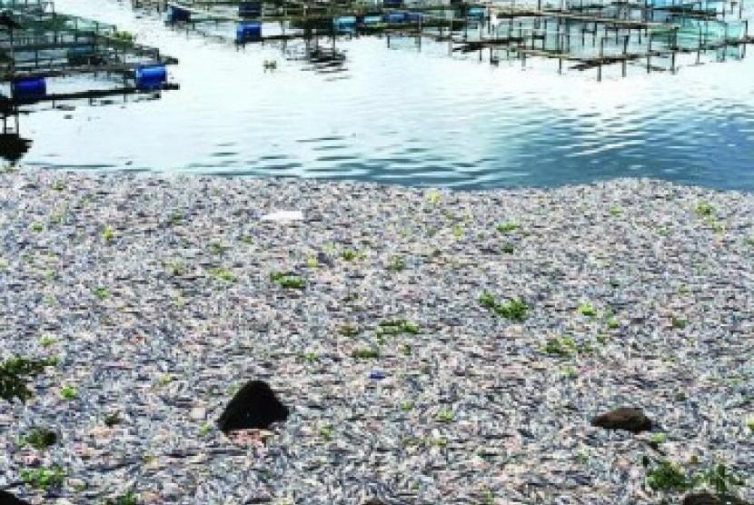 Puluhan ton ikan mati mendadak/ilustrasi