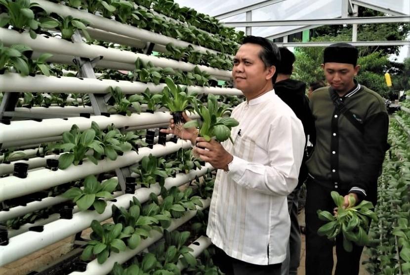 Perwakilan Bi Kaltim Kunjungi Kebun Hidroponik Bmh Depok