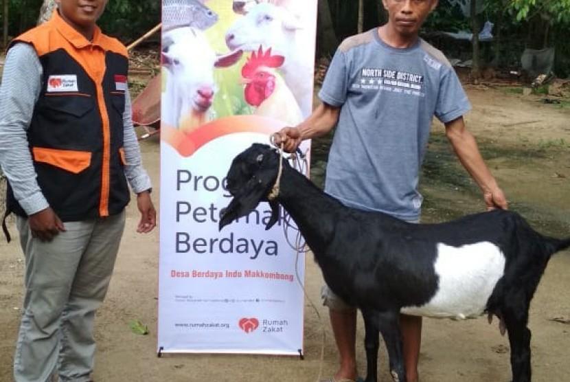 Rumah Zakat melalui fasilitator Desa Berdaya kembali menggenjot pengembangan kawasan ternak kambing di Desa Berdaya Indu Makkombong, Kecamatan Matakali Kabupaten Polewali Mandar.