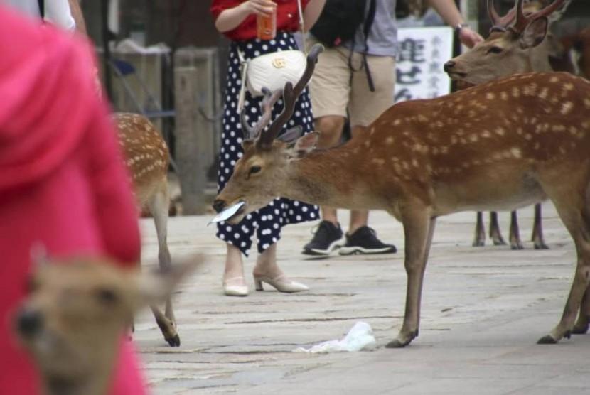 Rusa di Nara, Jepang memakan sampah plastik yang dibuang pengunjung. Sembilan dari 14 rusa yang mati menelan plastik.