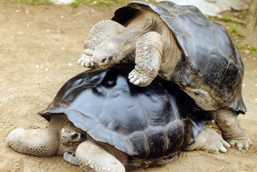 Satwa Galapagos. Kehidupan satwa di Pulau Galapagos terancam akibat gelombang sampah plastik.