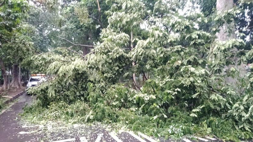 Sebuah pohon di Jalan Ahmad Yani, Kelurahan Tanah Sareal, Kecamatan Tanah Sareal, Kota Bogor tumbang dan menimpa dua orang hingga terluka pada Senin (2/11) pagi.