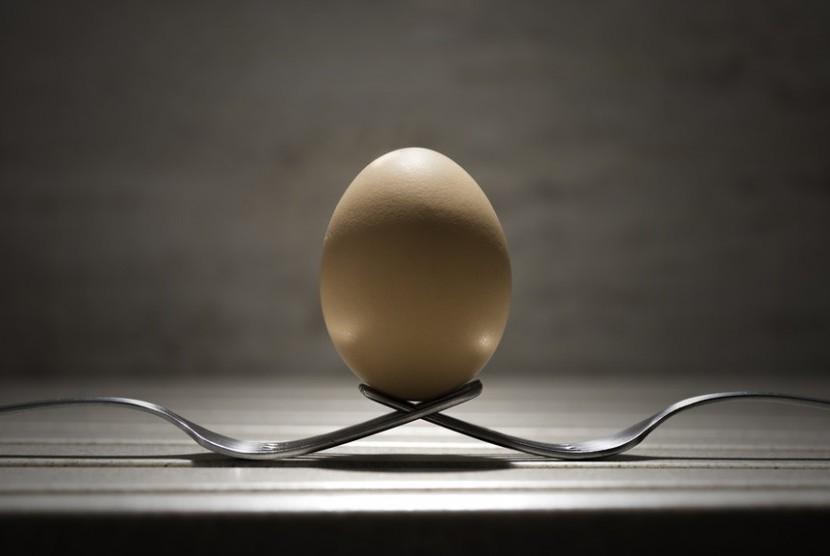 Sebutir telur.