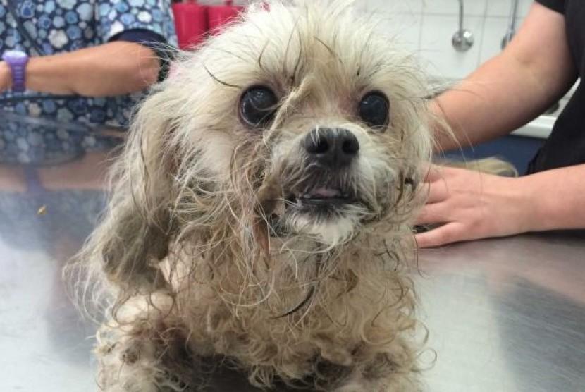 Utah Larang Pengendara Bawa Anjing di Bak Terbuka