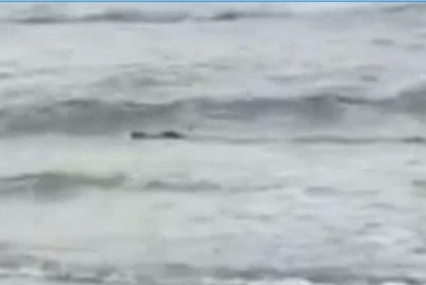 Seekor buaya di Pantai Casuarina terekam dalam video milik Danielle Andreoli saat Australia Day (26/1/2017).