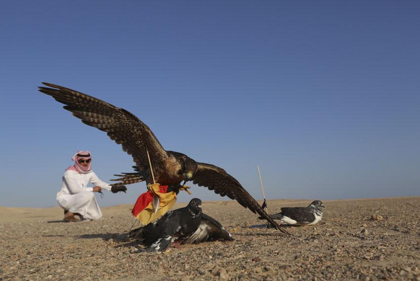 Seekor elang memilih memangsa merpati berbendera Jerman.