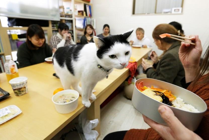 Seekor kucing peliharaan karyawan Ferray Corp di saat istirahat.