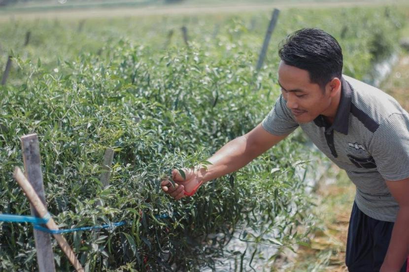 Sejak tahun 1993 hingga 2021 ini, Pertamina sudah membina lebih dari 8 ribu usaha kecil yang bergerak di bidang usaha pertanian.