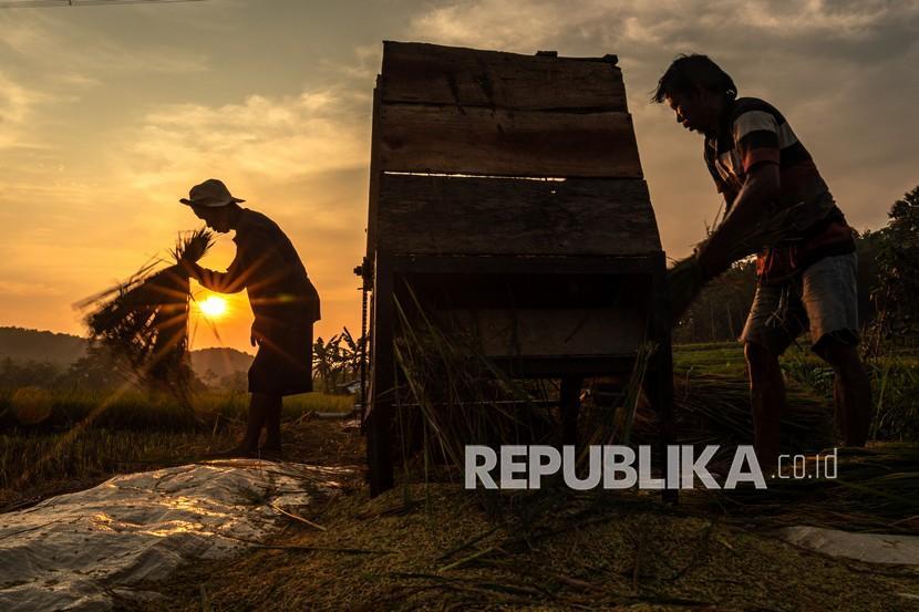 Tak Terdampak Pandemi, Pemkab Apresiasi Penyuluh Pertanian (ilustrasi).