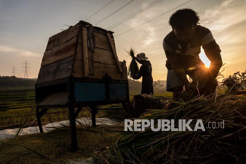 Sejumlah petani menyortir hasil panen padi saat senja di areal persawahan Desa Kawengen, Ungaran Timur, Kabupaten Semarang, Senin (15/3/2021). Kementerian Pertanian melalui Badan Penyuluhan dan Pengembangan Sumber Daya Manusia Pertanian (BPPSDMP) pada tahun 2021 akan menetapkan Duta Petani Milenial (DPM)/ Duta Petani Andalan (DPA) sebanyak 1.000 DPM/DPA usia antara 17-39 sebagai upaya mempercepat regenerasi petani yang saat ini didominasi oleh usia tua dan rentan.