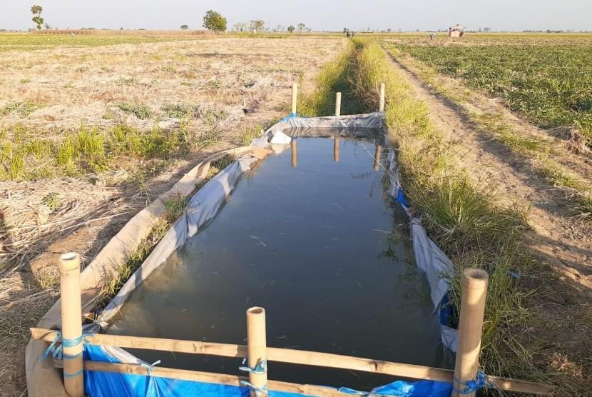 Sejumlah petani palawija di Kecamatan Kandanghaur, Kabupaten Indramayu, membuat tempat penampungan air di tengah sawah untuk mencegah tanaman agar tidak mati, Rabu (12/6). Mereka pun menyirami tanaman palawija di sawah secara manual dengan menggunakan ember.