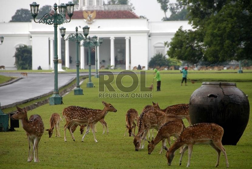 Istana Bogor di Jawa Barat telah mengirim rusa totol ke Pulau Rusa untuk ditangkarkan. (Ilustrasi)