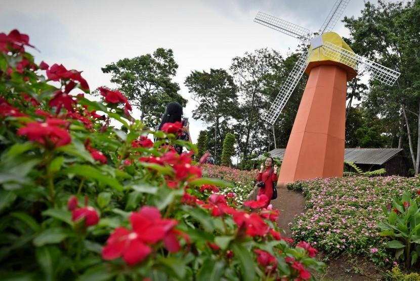 Taman Bunga Celosia Wisata Nuansa Negeri Belanda