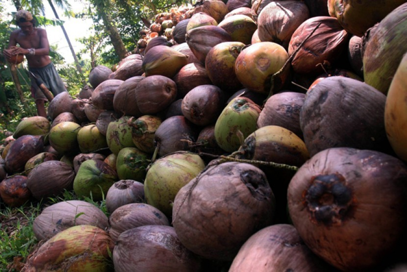 Seorang pekerja mengupas buah kelapa di Manado, Sulawesi Utara, Kamis (14/5). Kelapa tersebut selanjutnya diolah menjadi kopra dan dijadikan minyak goreng dan tepung kelapa serta beberapa bahan makanan lainnya