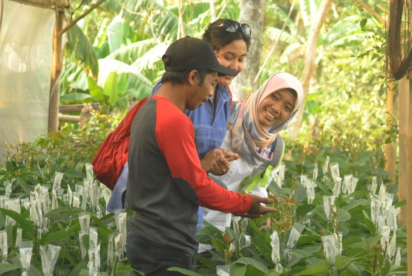 Seorang petani anggota Kelompok Tani Ngudi Rahayu, Dusun Kalibening, memberi penjelasan cara-cara budi daya tanaman buah alpukat kepada pengunjung.