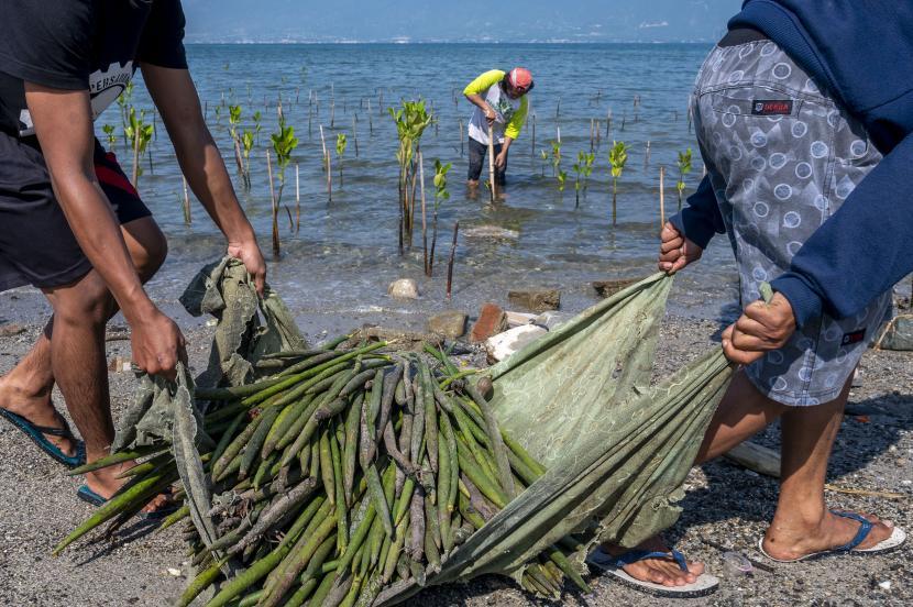 Seorang relawan menanam bibit pohon bakau di kawasan konservasi mangrove di Pantai Dupa, Palu, Sulawesi Tengah, Senin (26/7/2021). Hari Konservasi Mangrove Internasional yang diperingati pada setiap 26 Juli diisi dengan menanam dan edukasi tentang pentingnya mangrove, baik sebagai bagian dari ekosistem lingkungan maupun terhadap perlindungan kawasan pantai dari abrasi dan gelombang tsunami.