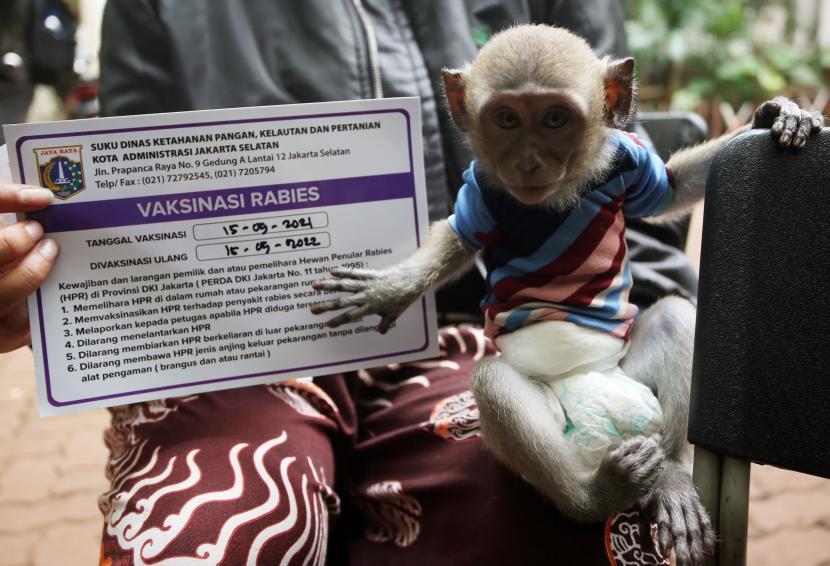 Seorang warga menunjukan surat Vaksinasi Rabies monyet peliharaannya di Petukangan Selatan, Jakarta, Rabu (15/9/2021). Pemberian Vaksin Rabies gratis tersebut untuk menghindari dan mengantisipasi penyebaran penyakit rabies kepada hewan peliharaan serta menargetkan wilayah Provinsi DKI Jakarta bebas rabies.