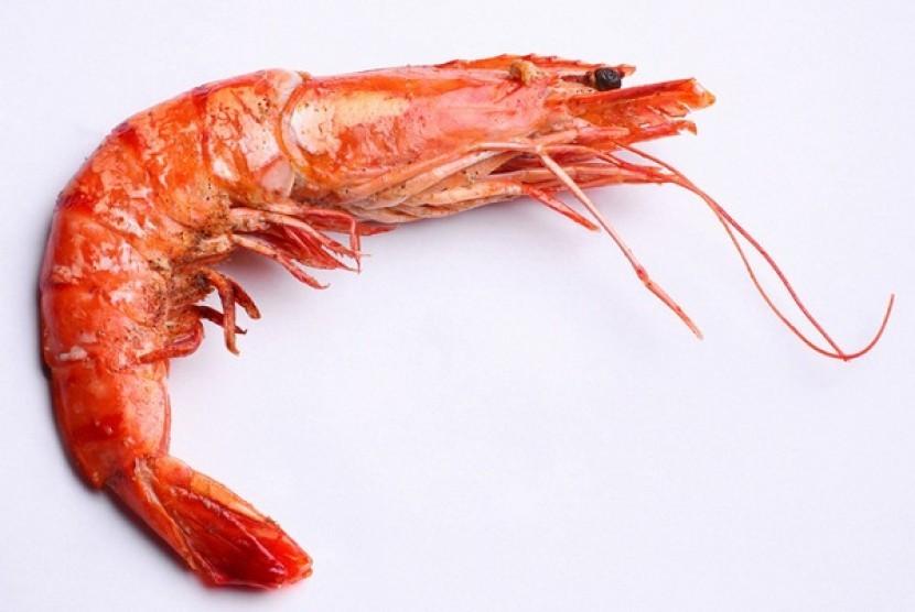 Shrimp (illustration)