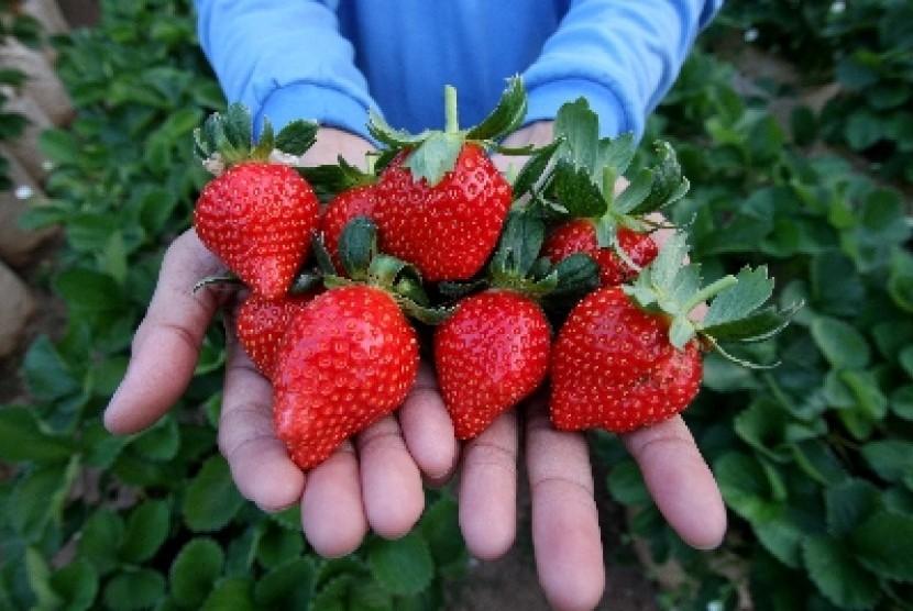 Strawberry, salah satu buah dengan kandungan vitamin C yang lebih tinggi dari jeruk.