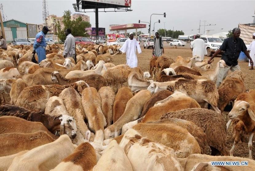 Suasana pasar hewan jelang Idul Adha di Sudan.
