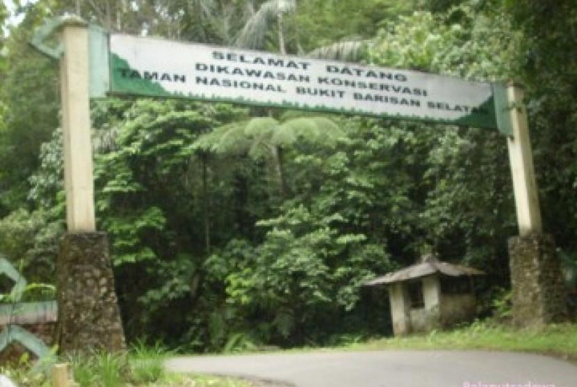 TNBBS Disebut Benteng Terakhir Flora Fauna Sumatra ... Images may be subject to copyright. Find out more Related images