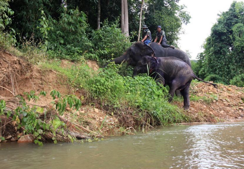 Taman Nasional Kaeng Krachan di Provinsi Phetchaburi, Thailand, meraih pemberian status Situs Warisan Dunia UNESCO.