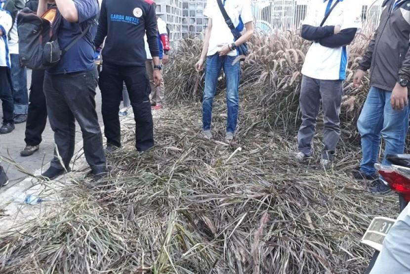 Tanaman di taman Istora Senayan yang rusak.