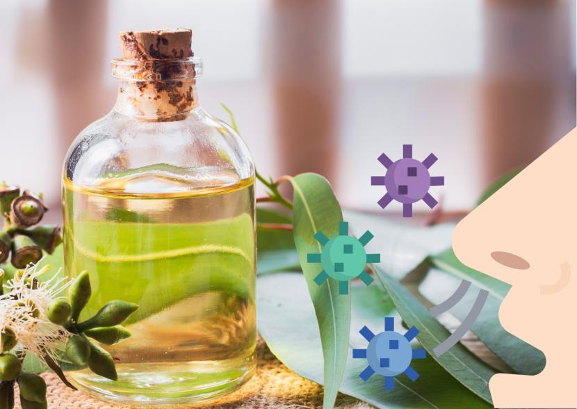 Terapi uap kayu putih atau eucalyptus