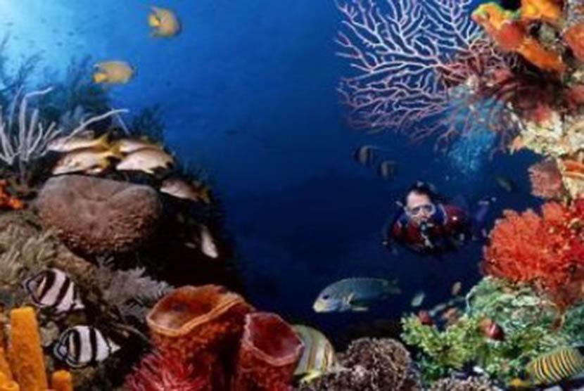 Coral reefs in Bunaken, Manado, North Sulawesi.