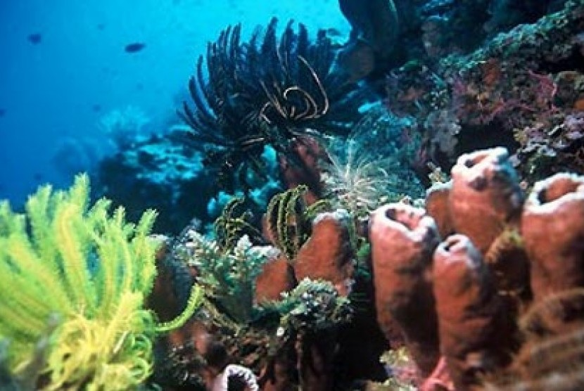 Terumbu karang di Bunaken