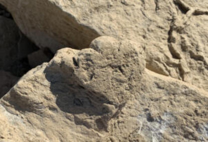 Tim ahli paleontologi internasional telah menemukan satu jejak kaki stegosaurus kecil, yang ditinggalkan 100 juta tahun lalu.