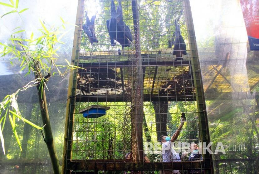 Tim dokter gabungan dari Balai Besar Konservasi Sumber Daya Alam (BBKSDA) Jawa Barat memeriksa kalong di kebun binatang Bandung, Jl Taman Sari, Kota Bandung, Jumat (13/5).