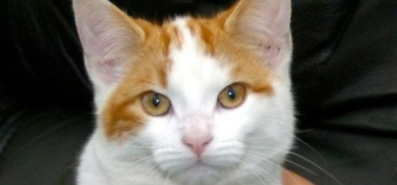 Subhanallah Inilah Rahasia Penciptaan Kucing Republika Online