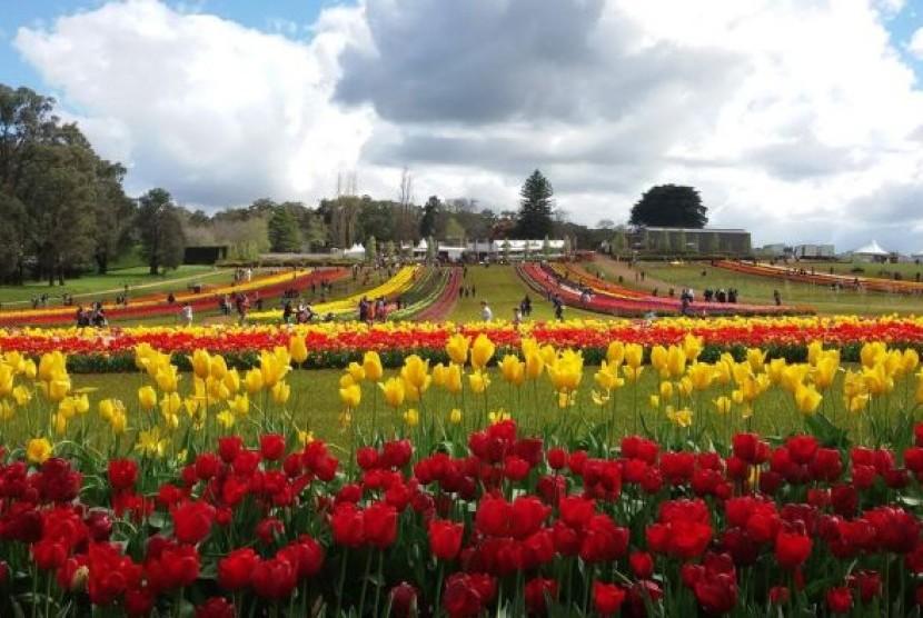 Tulip Festival tawarkan sepetak hamparan karpet