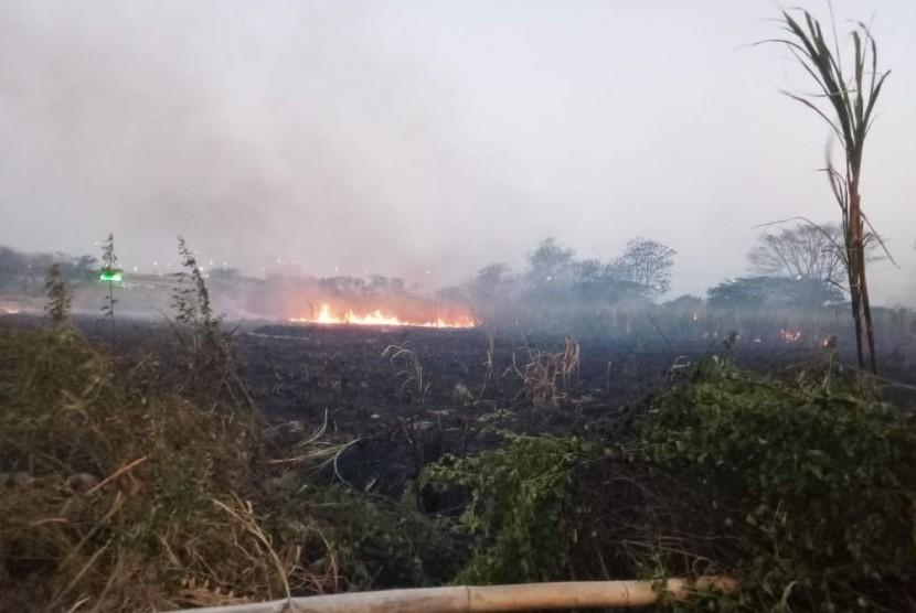 Upaya pemadaman kebakaran lahan ilalang yang terjadi di Desa Kanci, Cirebon, Jawa Barat (Jabar), Ahad (26/8).
