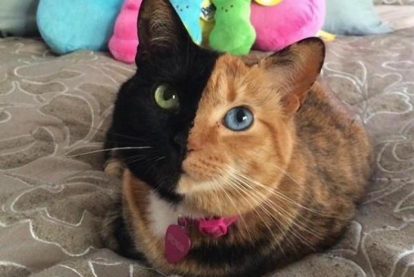Download 80+  Gambar Kucing Lucu Photo Imut Gratis