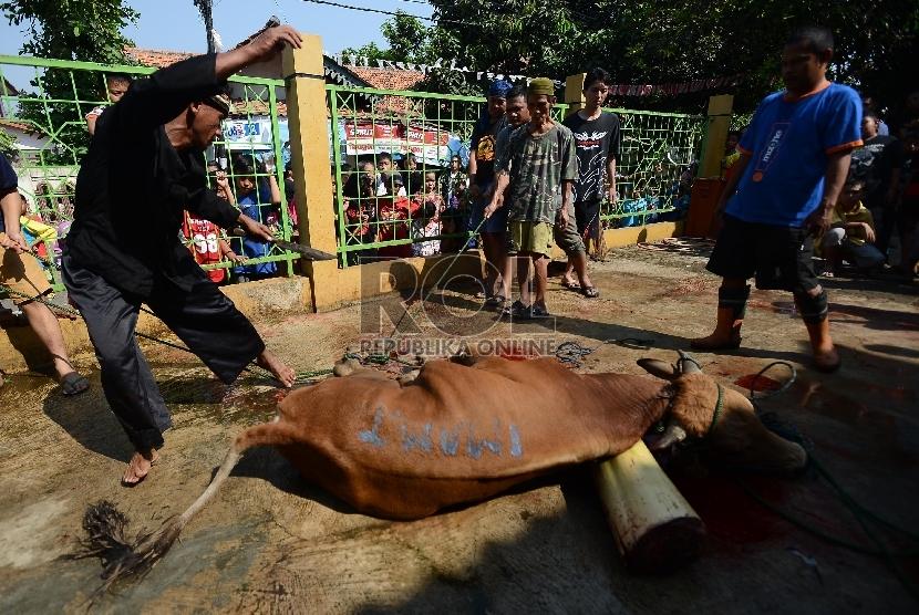 Warga berusaha menjatuhkan sapi untuk disembelih dalam rangka berkurban di perkampungan betawi, Jakarta Selatan.