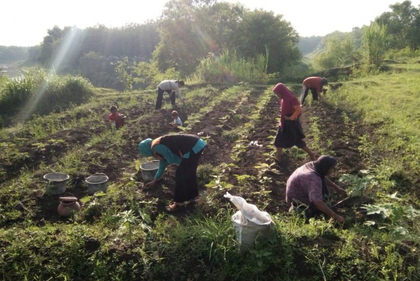 Warga desa berdaya di Dusun Krandon, Desa Berdaya Dapurno, Tegal, jawa Tengah berupaya menghidupkan kembali tanaman yang hampir mati karena kurang terawat.