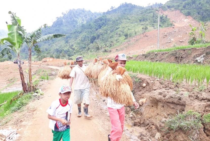Warga Dusun Cimapag Desa Sirnaresmi Kecamatan Cisolok, Kabupaten Sukabumi melakukan evakuasi padi yang tertimbun longsor Selasa (8/1).