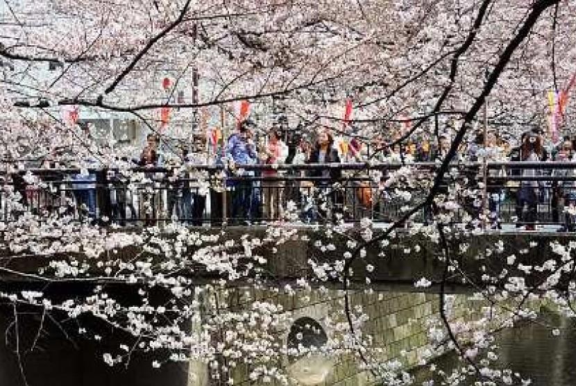 Warga Jepang menikmati aktivitas piknik di taman saat musim sakura berkembang