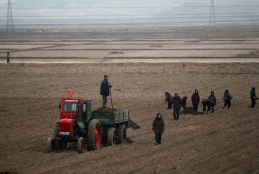 Warga Korut menggarap tanah di luar Pyongyang.