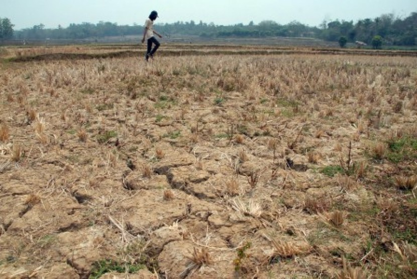 Warga melintas di lahan sawah yang kering di Jonggol, Bogor, Jawa Barat, Kamis (11/10). Sejak April- Oktober 2018, jumlah lahan sawah di Jabar yang terdampak kekeringan mencapai 25.862 hektare.