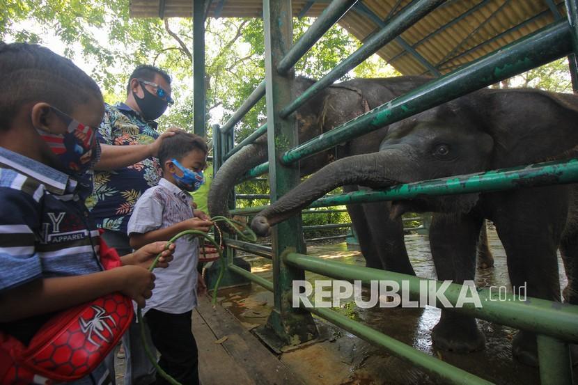Warga memberi makan gajah di Kebun Binatang Surabaya, Jawa Timur, Ahad (16/5/2021). Kebun Binatang Surabaya menjadi salah satu destinasi wisata yang ramai dikunjungi oleh wisatawan selama masa liburan Idul Fitri 1442 H.