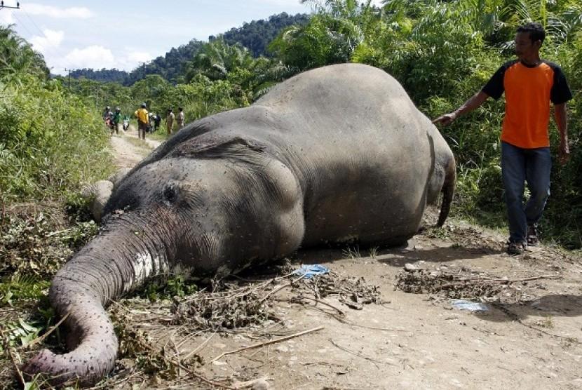 Warga menyaksikan seekor gajah Sumatera yang mati di Desa Krueng Ayon Kecamatan Sampoiniet Kabupaten Aceh Jaya Provinsi Aceh, Selasa (1/5). Gajah betina yang berusia 18 tahun itu diduga tewas akibat di racun pemilik perkebunan sawit.
