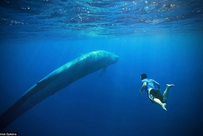 Wisatawan berenang dengan paus