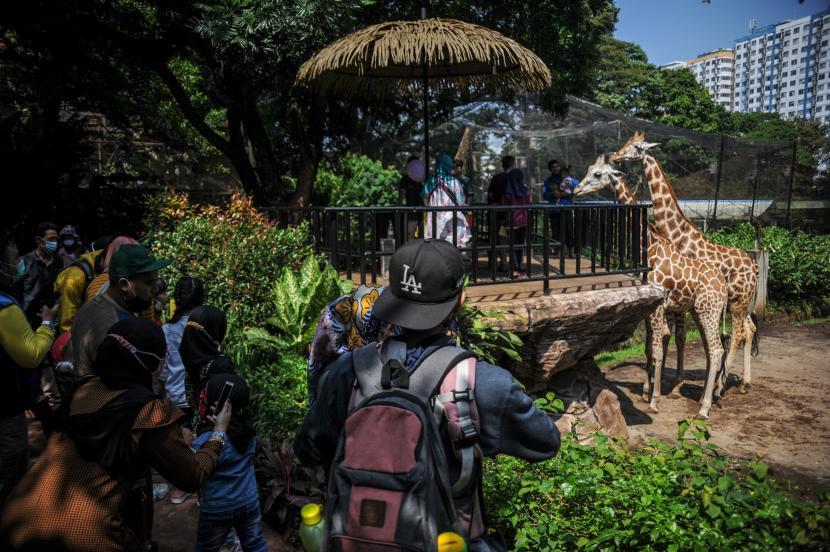 Wisatawan berkunjung ke kandang jerapah di Bandung Zoological Garden (Bazoga), Bandung, Jawa Barat, Sabtu (15/5/2021). Selama libur Idul Fitri 1442 H, pengelola Bazoga menargetkan enam ribu kunjungan wisatawan per hari selama 10 hari.