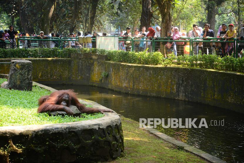 Ragunan Jadi Objek Wisata Favorit Peserta Asian Games