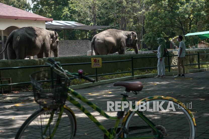 Wisatawan mengunjungi kawasan Gembira Loka Zoo di Umbulharjo, Yogyakarta, Kamis (16/9/2021). Gembira Loka Zoo menjadi destinasi untuk ujicoba pembukaan tempat wisata di Yogyakarta selama Pemberlakuan Pembatasan Kegiatan Masyarakat (PPKM) Level 3 dengan syarat pengunjung diatas 12 tahun serta telah mendapatkan vaksinasi COVID-19.