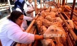 Pemkot Yogyakarta Akan Batasi Pedagang Hewan Kurban Dadakan