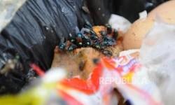 Cara Mudah Hilangkan Lalat dan Kurangi Bau di Tempat Sampah